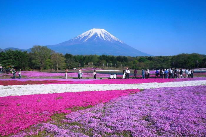 7 nơi ngắm hoa mùa xuân đẹp mắt
