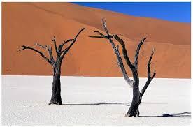 Tiếng Khóc  Của Sa Mạc