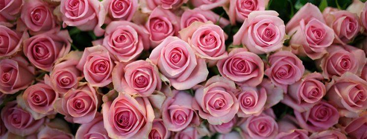 50 000 hoa hồng cho các bệnh viện, các nhà hưu dưỡng và các cơ sở y tế xã hội