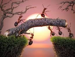 Bài học từ loài kiến