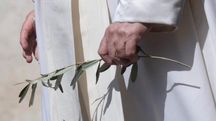 Cành ô-liu trong tay giáo hoàng