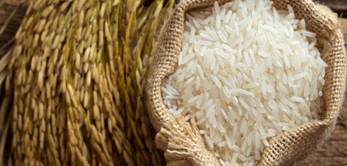 Caritas: Hạt gạo mùa covid
