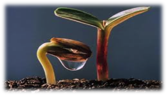Chuyện hạt giống