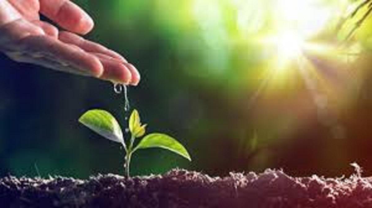 Vài suy tư về môi sinh dưới cái nhìn của Học thuyết Xã hội Công giáo