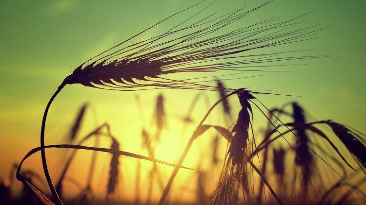 ĐTC Phanxicô: Vượt qua nạn đói là một trong những thách đố lớn của nhân loại