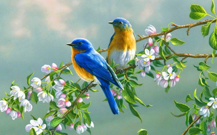 Lãng mạn là hương vị của một thiên đàng nếm trước