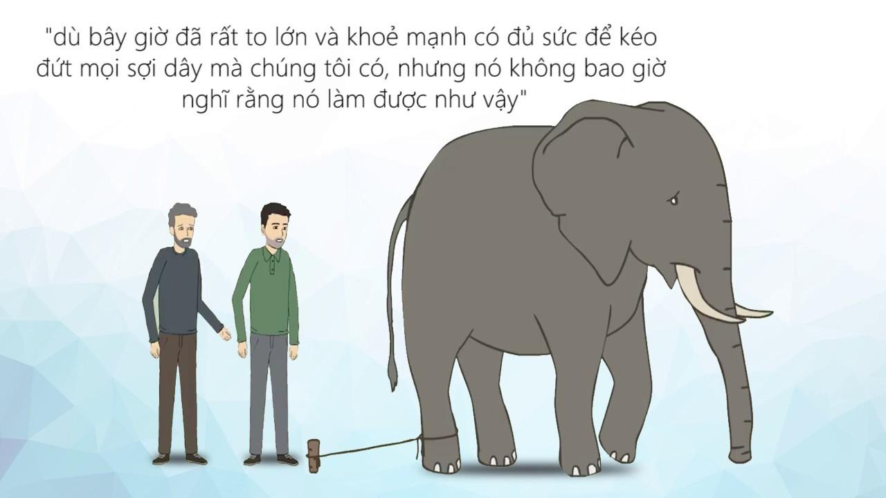 Sợi dây thừng và con voi
