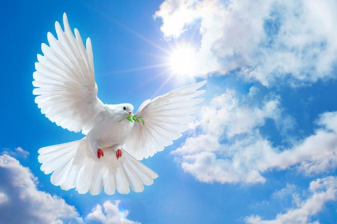 Tìm kiếm sự Bình an đích thực