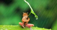Truyện ngụ ngôn thấm thía: Hai vị vua trong vương quốc Giếng Cổ của loài ếch